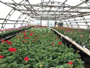 Blumen Vogler: Gärtnerei